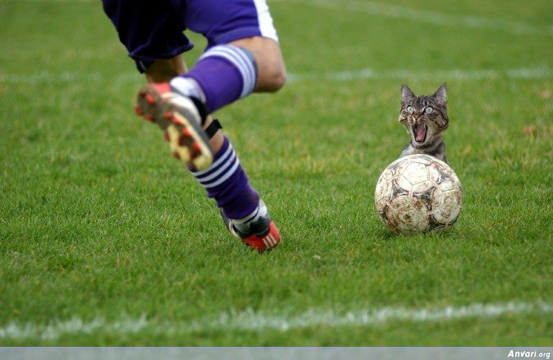 Soccer Cat Kick - Amazing Moments