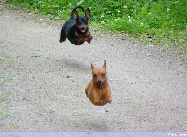Hovering Dogs - Kodak Moments