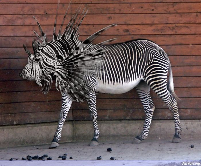 Photoshopped Animal 04 - Photoshopped Animals