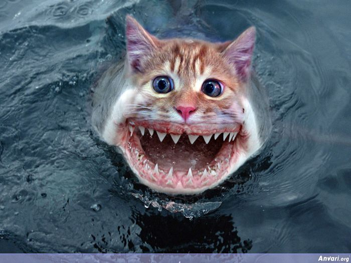 Shark Eating Cat