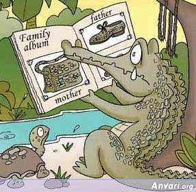 Aligator Family Album - Animals