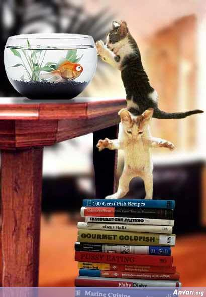 Cats Helping Eachother to get the Fish - Animals