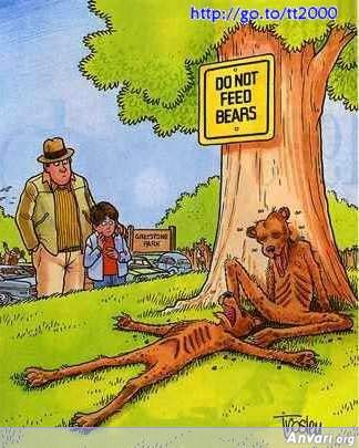 Do not Feed Bears - Animals