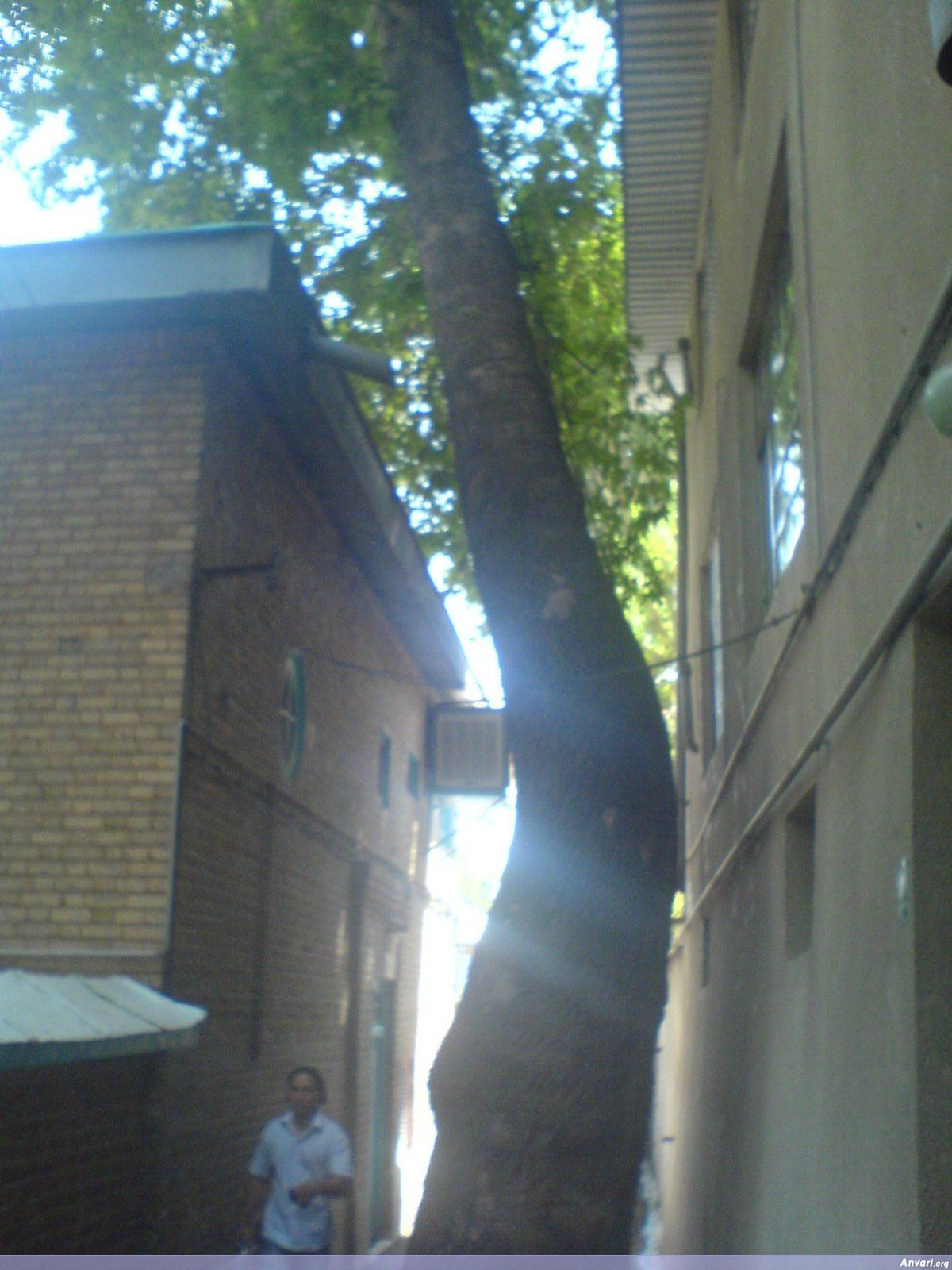 Tree Growing Carefully Between Houses - Farsi