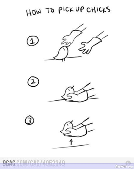 How to Pick Up Chicks - How to Pick Up Chicks