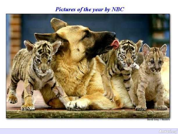 NBC Tigers - Photography